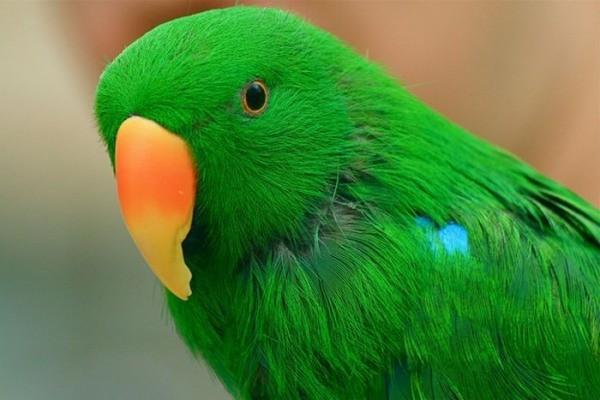 имя попугаю