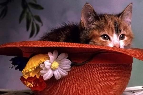 кличка котёнка