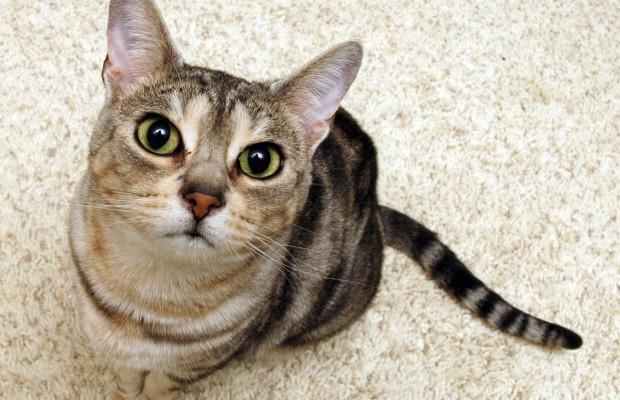 1290030831_29_wallpaper_cats