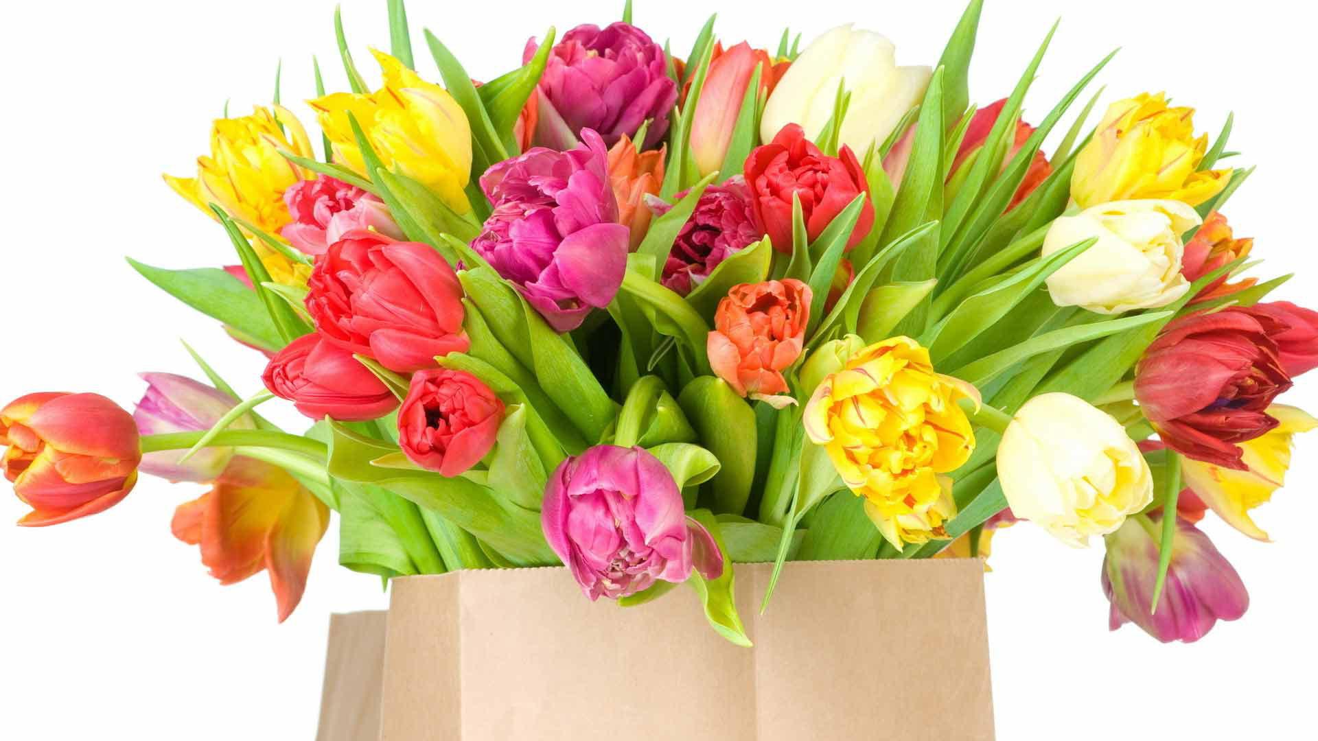 Горшечные оптом, 8 марта красивые букеты
